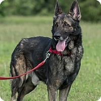 Adopt A Pet :: Shaggy - Dacula, GA