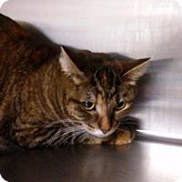Adopt A Pet :: Meowsical *$20 Fee* - Ottawa, KS