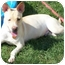 Photo 2 - Pit Bull Terrier/Shepherd (Unknown Type) Mix Dog for adoption in Appleton, Wisconsin - Fred