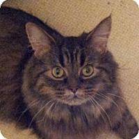 Adopt A Pet :: Miss Juliet - Columbus, OH