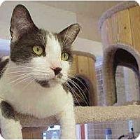 Adopt A Pet :: Deerfield - Deerfield Beach, FL