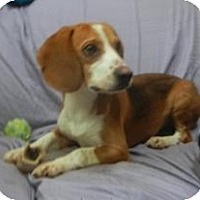 Adopt A Pet :: Scout ADOPTED!! - Antioch, IL