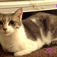 Adopt A Pet :: Cher-female- - Knoxville, TN