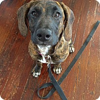 Adopt A Pet :: Cambree - Baltimore, MD