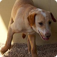 Adopt A Pet :: Max - Von Ormy, TX