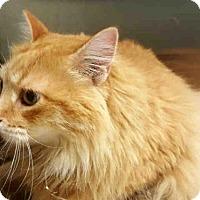 Adopt A Pet :: FLUFFY - Toronto, ON