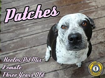 Adopt A Pet :: Patches  - Nicholasville, KY