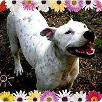Adopt A Pet :: Journey - Orlando, FL