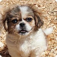 Adopt A Pet :: Peter - Allentown, PA