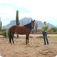 Adopt A Pet :: Arenah - Apache Junction, AZ