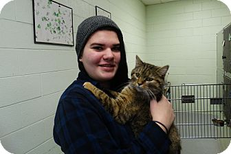 Domestic Shorthair Cat for adoption in Elyria, Ohio - Becky