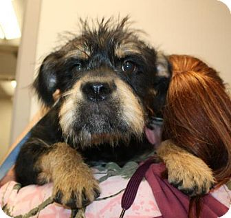 Terrier (Unknown Type, Medium) Mix Dog for adoption in Cottageville, West Virginia - Chase