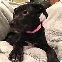 Adopt A Pet :: Odessa - Lewisville, IN