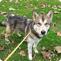 Adopt A Pet :: Yukon - 6 months - Augusta County, VA