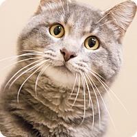 Adopt A Pet :: Geo - Chicago, IL
