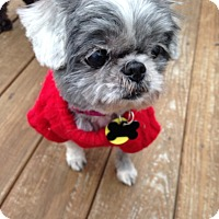 Adopt A Pet :: Cindy Lou - Wilmington, DE