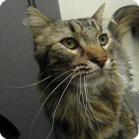 Adopt A Pet :: Geo - Milwaukee, WI