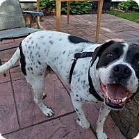 Adopt A Pet :: PeteY - LAKEVILLE, MA