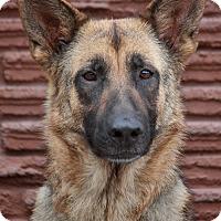 Adopt A Pet :: Dinah von Dingen - Los Angeles, CA