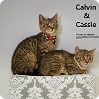 Adopt A Pet :: Cassie & Calvin - Brockton, MA
