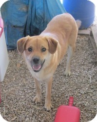 Shepherd (Unknown Type)/Terrier (Unknown Type, Medium) Mix Dog for adoption in Medora, Indiana - Daisy