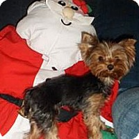 Adopt A Pet :: Kellie - Cleveland, OH