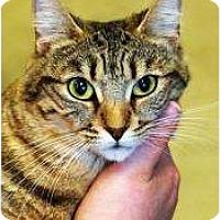 Adopt A Pet :: Bonnie - Encinitas, CA