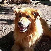 Adopt A Pet :: Boomer - New Boston, NH