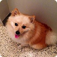 Adopt A Pet :: Rusty - Miami, FL