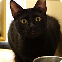 Adopt A Pet :: DIGI - Diamond Bar, CA