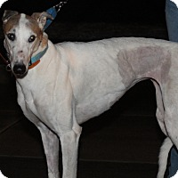 Adopt A Pet :: Oshkosh Jolene