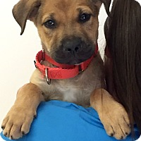 Adopt A Pet :: Rufus - Mission Viejo, CA