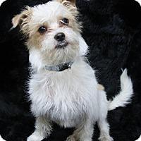 Adopt A Pet :: Toby - Rockwall, TX