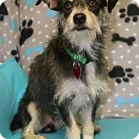 Adopt A Pet :: Max - Winters, CA