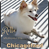Adopt A Pet :: Rella - Elmhurst, IL