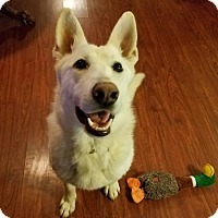 Shepherd (Unknown Type) Mix Dog for adoption in Oakland, Michigan - Titan