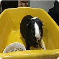Adopt A Pet :: *Urgent* Toby - Fullerton, CA
