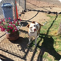 Adopt A Pet :: Chance - Gardnerville, NV