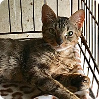 Adopt A Pet :: Rosa - Salem, NH