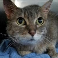 Adopt A Pet :: Precious - Prineville, OR