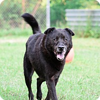 Adopt A Pet :: Tyson - Virginia Beach, VA