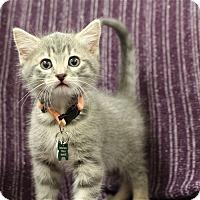 Adopt A Pet :: Lamont - Neosho, MO