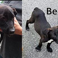 Adopt A Pet :: Beaker - Flint, MI