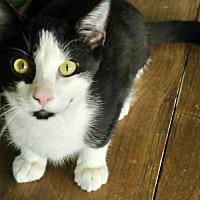 Adopt A Pet :: Trixster - San Antonio, TX