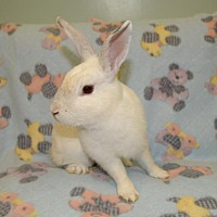 Adopt A Pet :: Isaiah - Chesterfield, MO