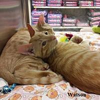 Adopt A Pet :: Watson - Fullerton, CA