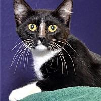 Adopt A Pet :: Ollie - Lenexa, KS