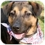 Photo 1 - Shepherd (Unknown Type)/Rottweiler Mix Dog for adoption in Cincinnati, Ohio - Rowdy