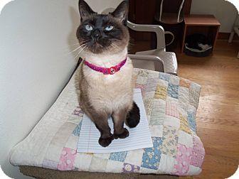 Persian Cat for adoption in Salem, Ohio - Gretta