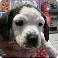 Adopt A Pet :: Kimball - Alexandria, VA